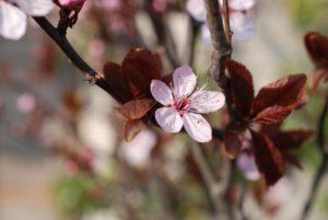 Vrolijke voorjaar stoffeer weken